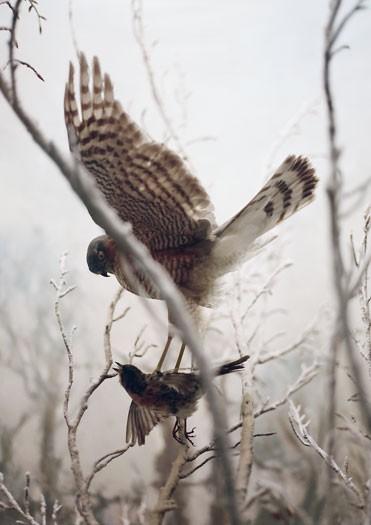 https://laetitiagessler.com/files/gimgs/th-7_oiseau2.jpg