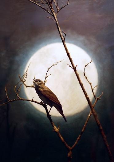https://laetitiagessler.com/files/gimgs/th-7_oiseau_accentuation.jpg